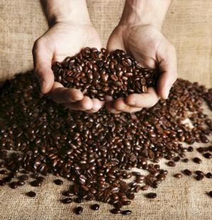 Variedades, historia y secretos del café